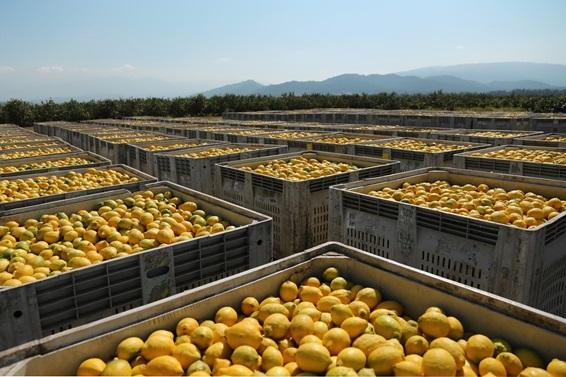 citrus imports