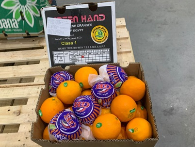 First shipments of Egyptian oranges of the season brought in to Brazil